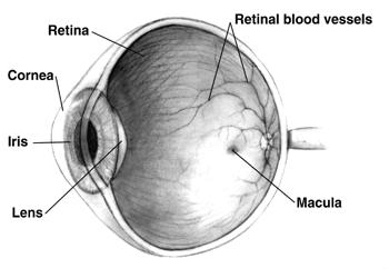 Le malattie della retina